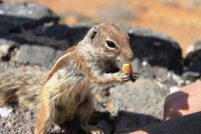 Wildlife Get Fed Tasty Snacks