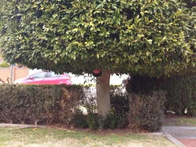 Spot the Hedge Fencer