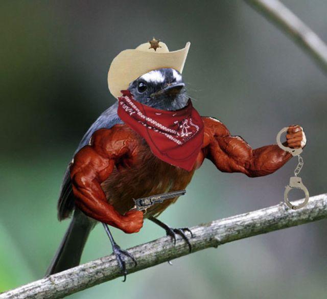 Unsusual Birdie Photography