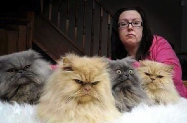 PURRfect Pissed Off Cat Photos