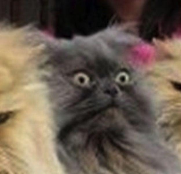 Purrfect Pissed Off Cat Photos 22 Pics Izismile Com