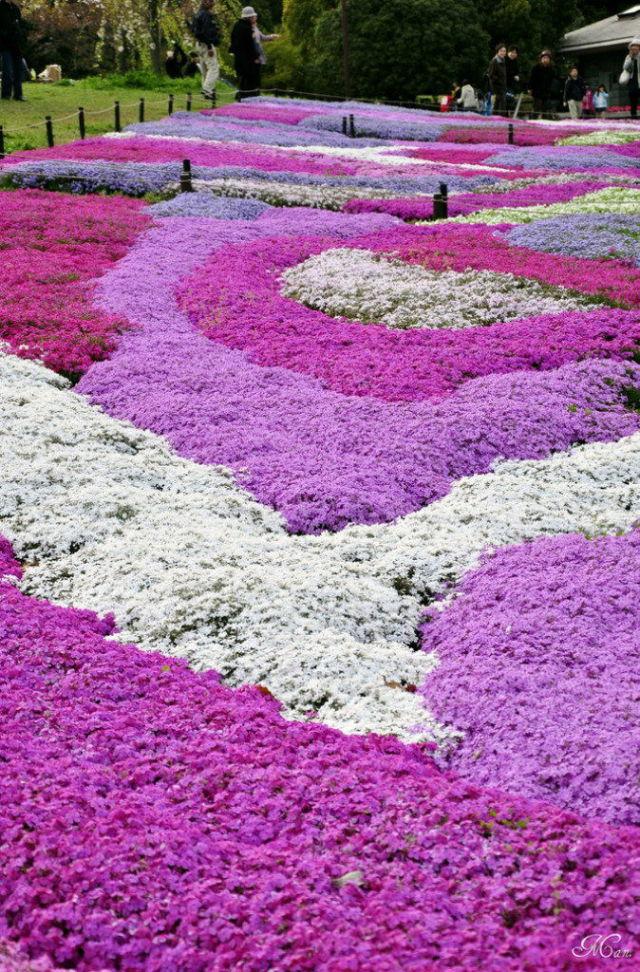 Japan's Pretty Pink Park