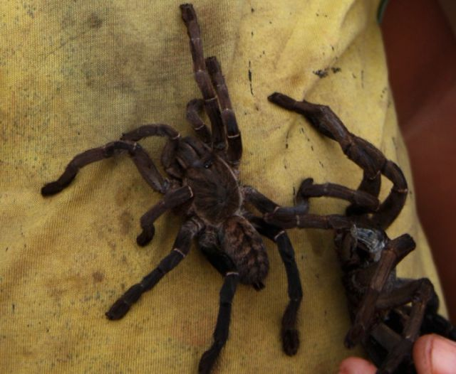 Special Spidery Snack