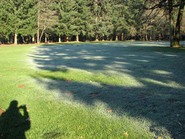 Frost Shadows Create All-Natural Works of Art