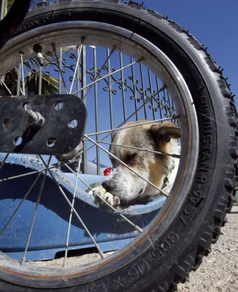 Cool Dog Gets His Very Own Set of Wheels