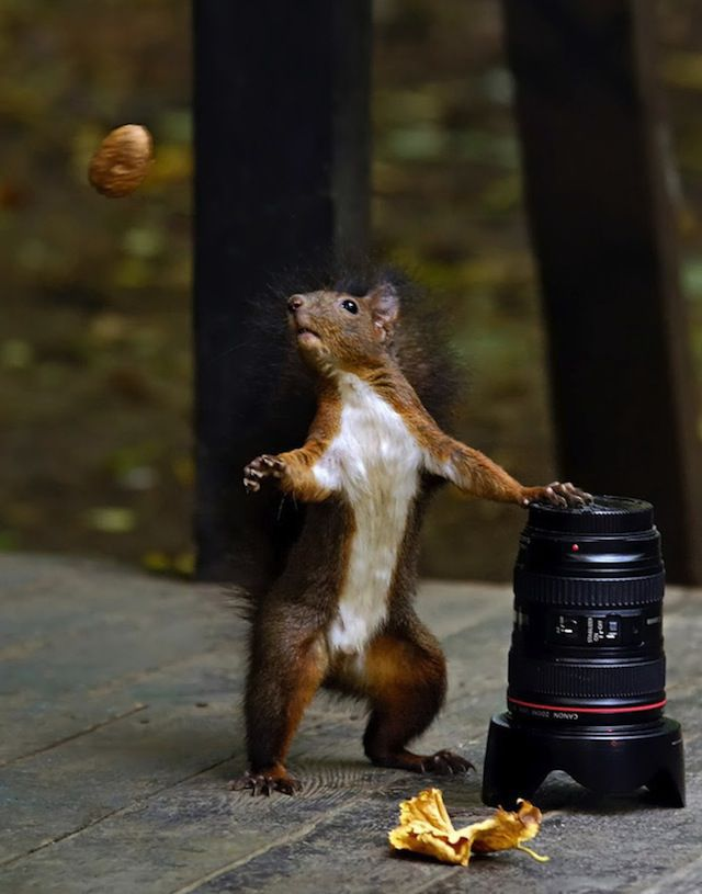 Amazing Photos of Animals Caught in the Act