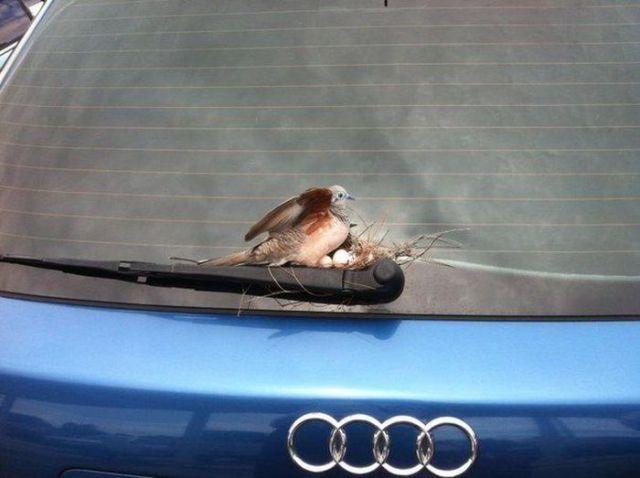 Car-Themed Jokes. Part 2