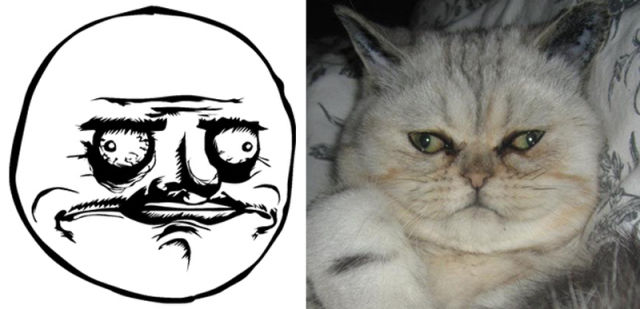 The Real Cats Behind The Cartoon Rage Faces 18 Pics Izismile Com