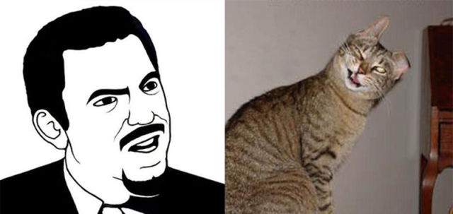 The Real Cats Behind the Cartoon Rage Faces