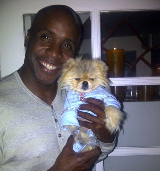 This Popular Pomeranian Has Many Celebrity Friends