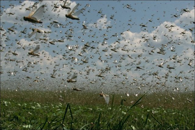 Beware the Locust Invasion