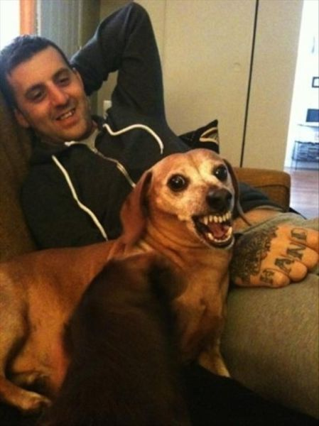 Peculiar Pets and Owners Pics