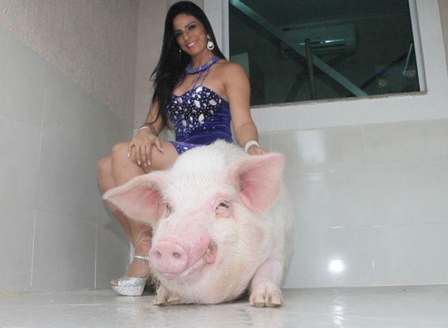 Would You Keep a 250kg Pet Pig?