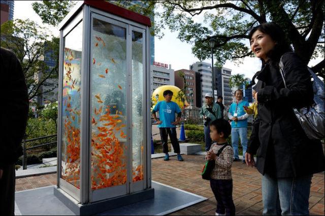 A One-of-a-kind Public Phone Booth Aquarium