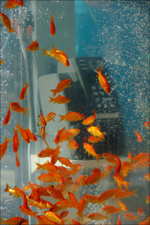 A One-of-a-kind Public Phone Booth Aquarium