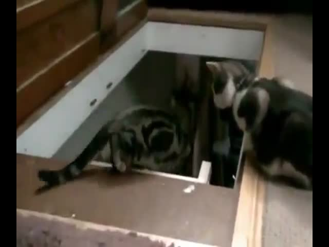 Cats Being Complete Assholes