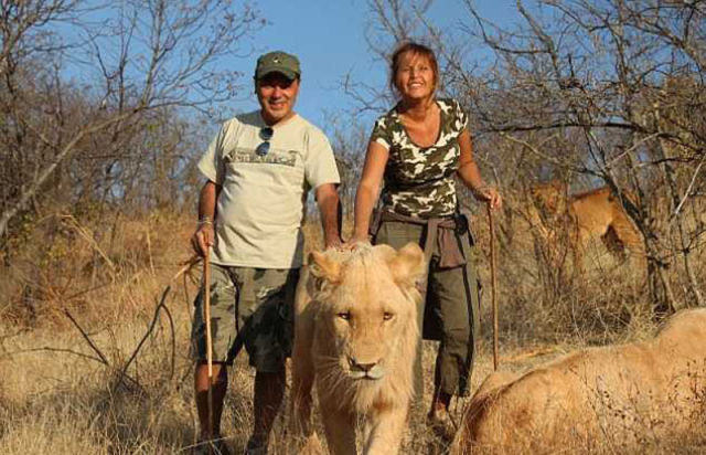 The Fearless Couple Who Play with Wild Cats