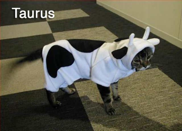 Cats Recreate the 12 Signs of the Zodiac
