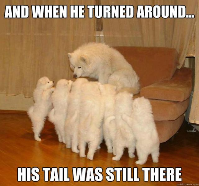 The Best Stories of the Storytelling Dog Meme
