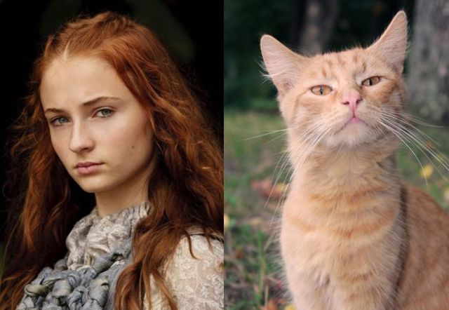 The Game of Thrones Cast as Cats