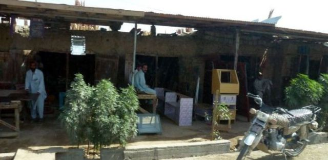 Afghanistan Streets Lined with Cannabis Plants