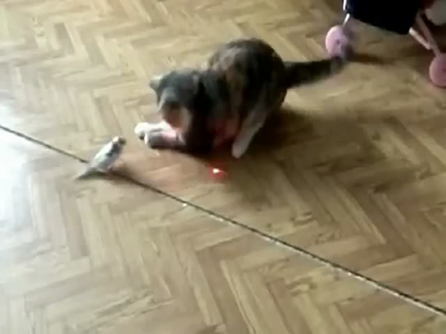 Cat and Bird Chasing a Laser Pointer Together