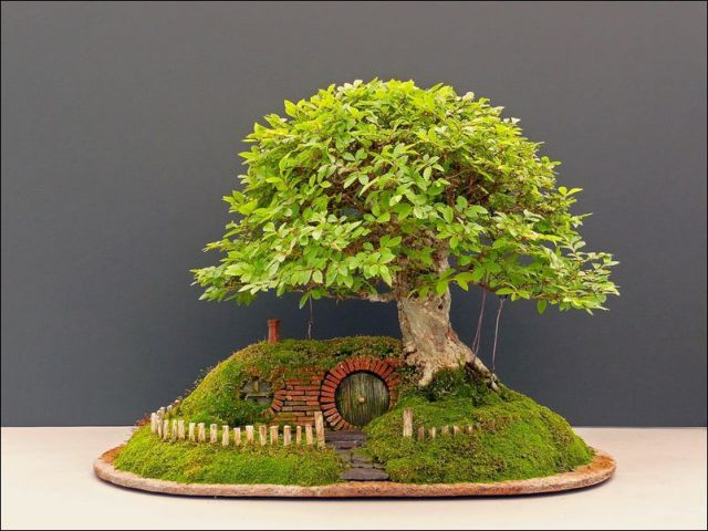 A Very Sweet Bonsai Hobbit House