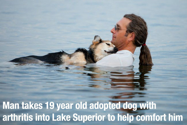 Dogs Are a Great Source Of Unconditional Love