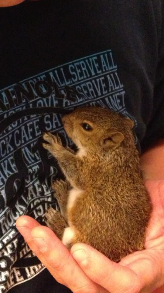 Look What This Guy Found in a Bag of Mulch