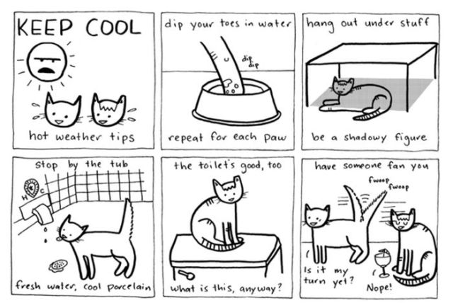 Comic Entertainment Featuring Cats