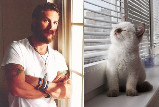 It's Really Funny When Cats Mimic Men