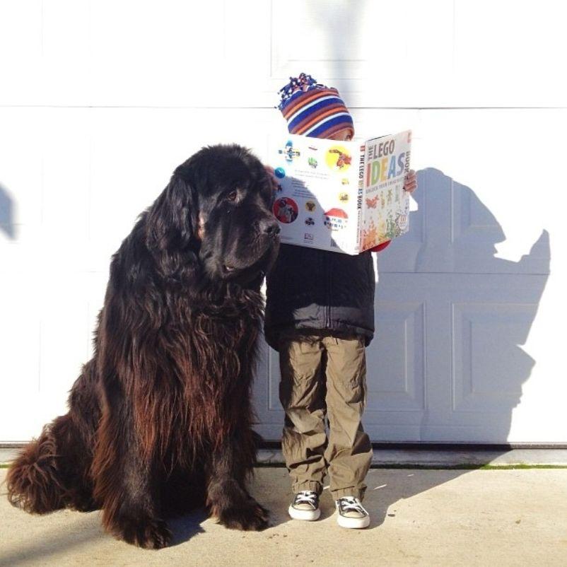 Мальчик и бульдог. собаки. Смотрите также. дети. Фотограф Сташа