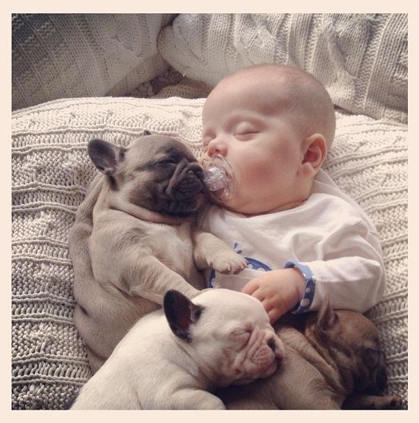 Малыш и щенки бульдога 11 фото