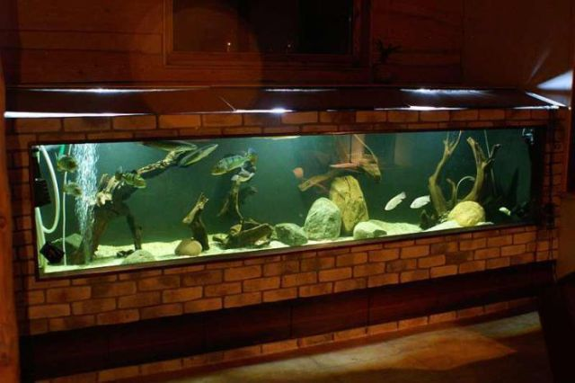 Giant Self-Made Home Aquarium