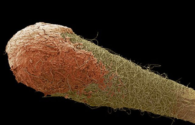 Ordinary Everyday Items Look So Cool Under A Microscope