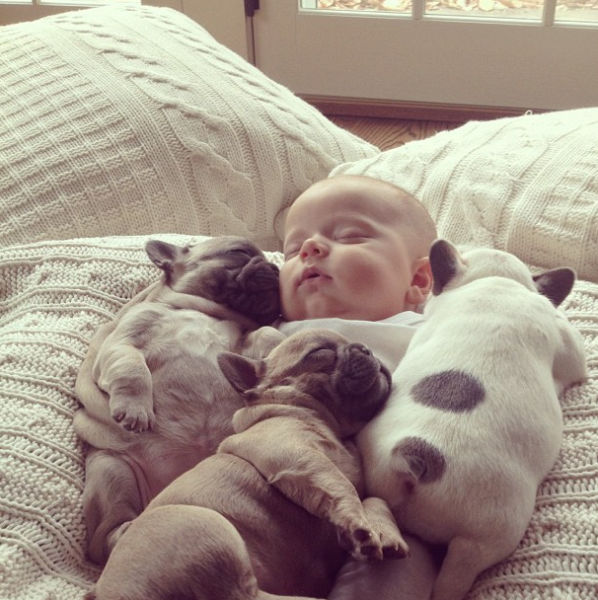 The Most Adorable Photos of a Baby with Bulldog Puppies