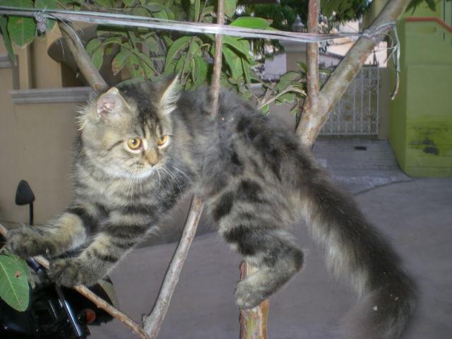 Cats Cats & Cats