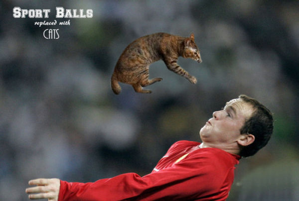 If Sports Balls Were Cats Instead…
