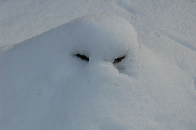 alien in snow?