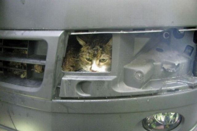 The Unhappy Car Wash Cat!