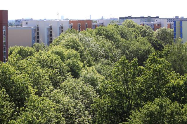 Wood between High-rise Buildings