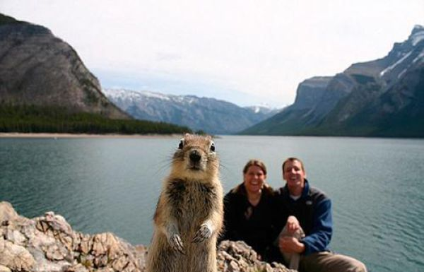 Animal Photobombs That Are Simply Classic