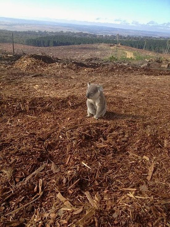 Where Have All The Trees Gone?