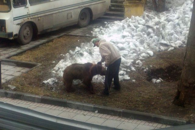 What It Means to Take Your Pet for a Walk in Russia