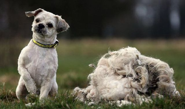 A Neglected Shaggy Dog Gets a Close Shave