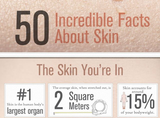 Facts You Should Know about the Skin You're In