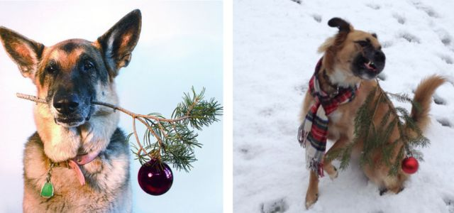 Why You Should Never Aspire to Recreating Awesome Pinterest Photos