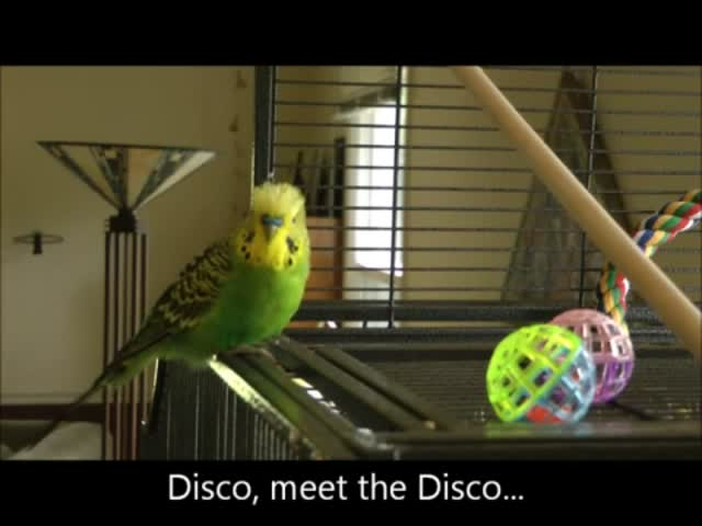 Hilarious Parakeet Tells a Lot of BS