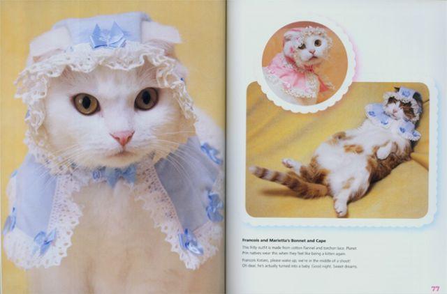 The fancy heart-melting cat parade!