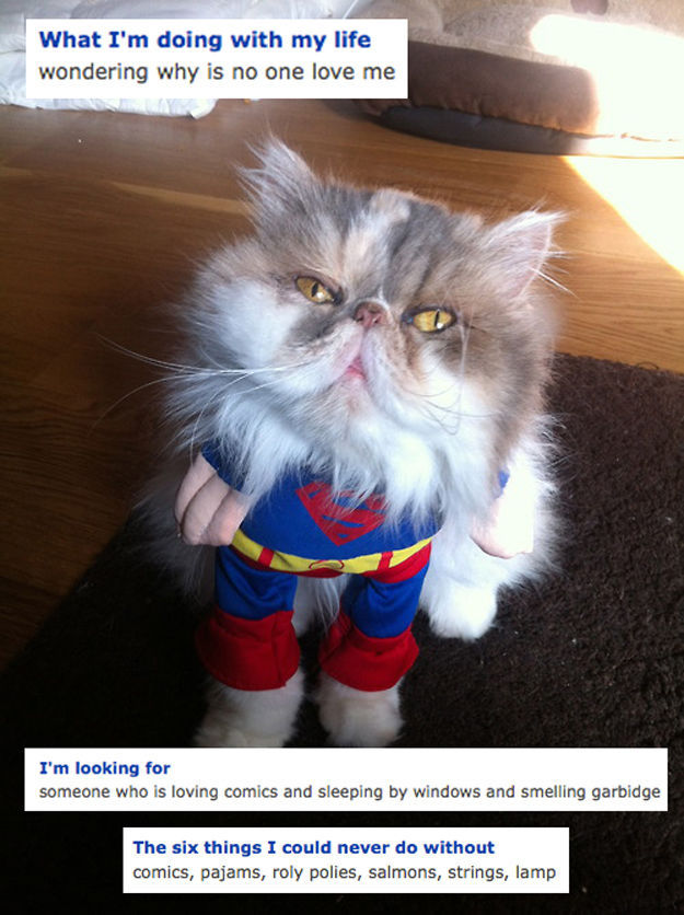 The Weirdest Cats You Might Run Into on OkCupid